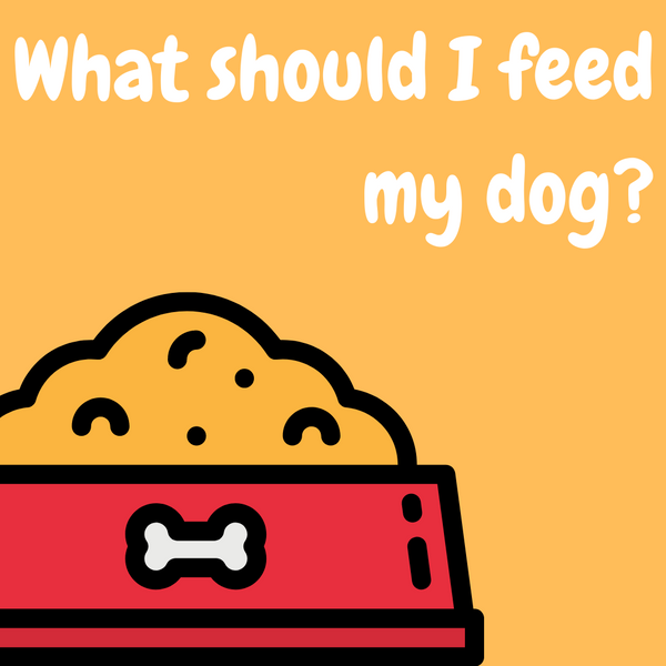 What should I feed my dog?