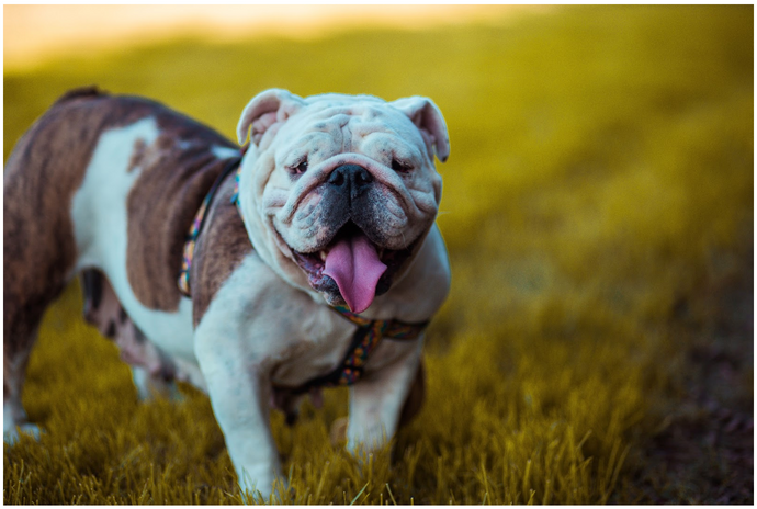 Support Your Dog's Longer Lifespan With These Tips | Cheap Online Pet Store Australia
