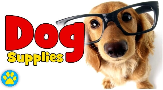 Most Essential Products to Choose from a Dog Supplies Online