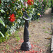 Solstice Sculptures Romantic Twist Ebony Effect - Ruby's Garden Boutique