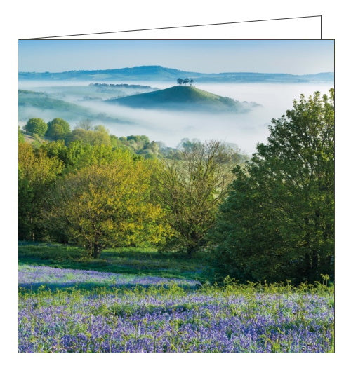 Abacus BBC Countryfile bluebells colmers hill blank card