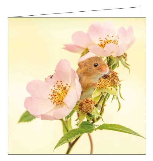 Abacus BBC Springwatch harvest mouse blank card