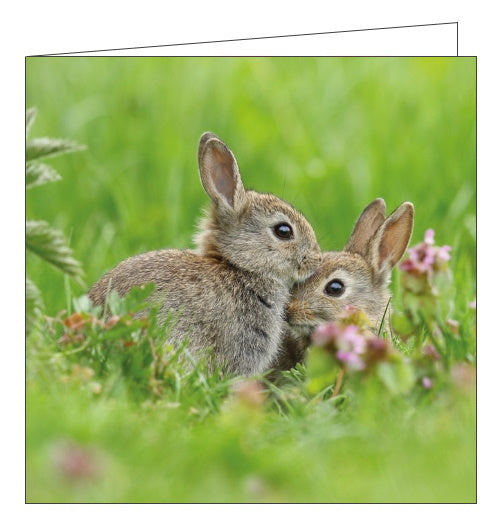 Abacus Countryfile wild rabbits blank card