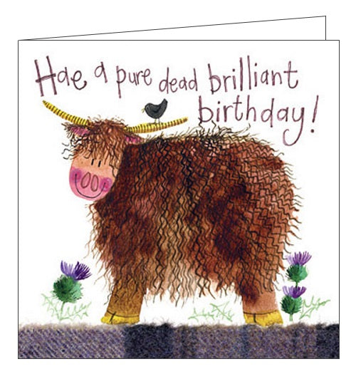 Alex Clark Happy Birthday Scottish Highland Cow Hae a Pure Dead Brilliant Birthday for him Nickery Nook