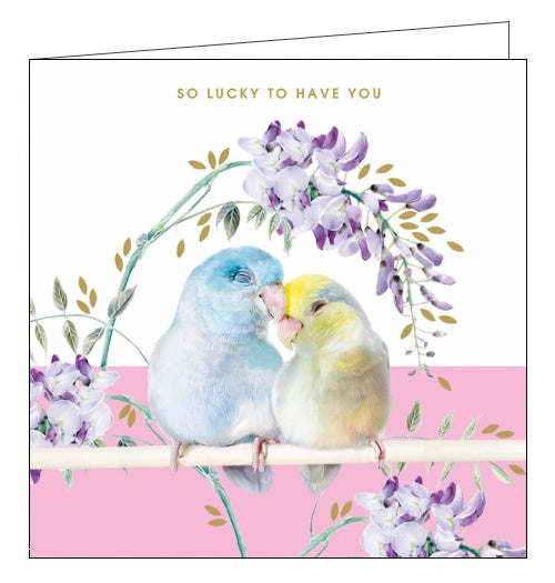 Lola Designs lovebirds parrotlet birthday card