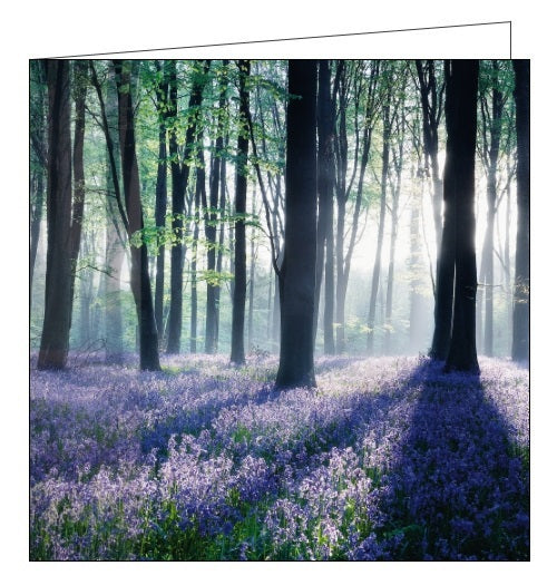 Noel Tatt Cube blank card bluebell woods flowers trees photographic Nickery Nook