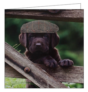 Noel Tatt Cube blank card cute puppy lab flatcap blank card Nickery Nook