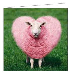 Noel Tatt Cube blank card humour photographic pink sheep heart blank card Nickery Nook
