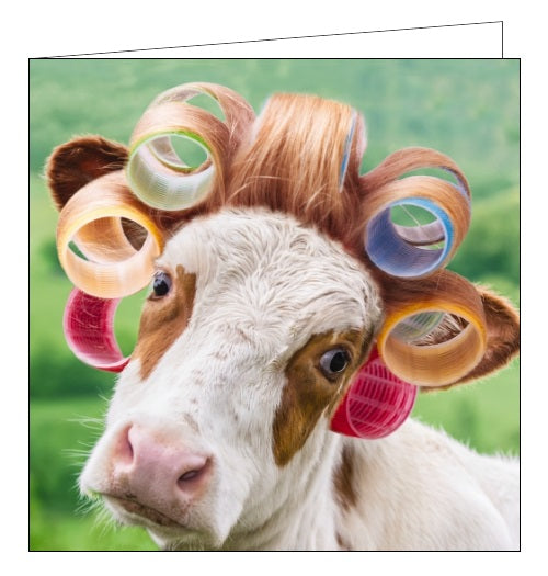Noel Tatt cow in curlers humour funny blank card Nickery Nook