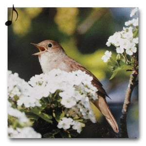 Really Wild Cards nightingale sound, blank, greetings, birds, birthday card Nickery Nook