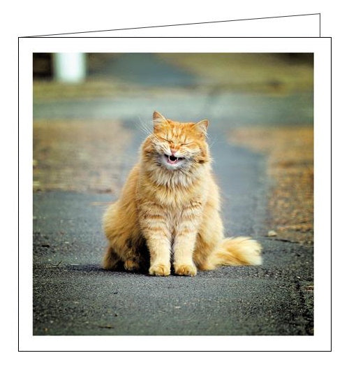 Woodmansterne Cattitude funny cat blank card