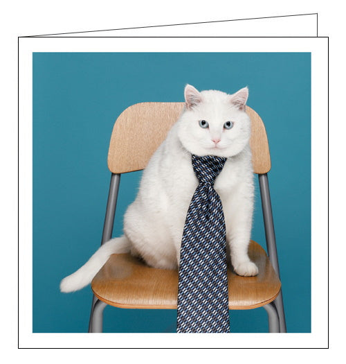 Tie-riffic - Cattitude cards