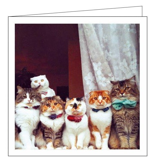 Woodmansterne Cattitude party time cats blank card Nickery Nook