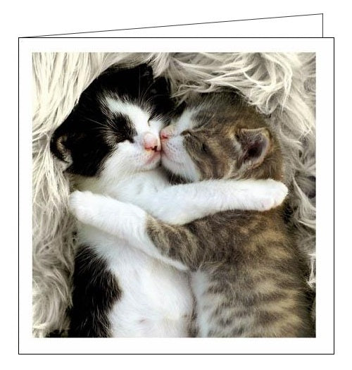 Woodmansterne Cattitude snuggle up cats blank card Nickery Nook