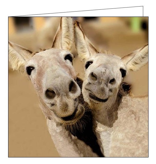 Woodmansterne Framed camels humour animals friendship blank card Nickery Nook
