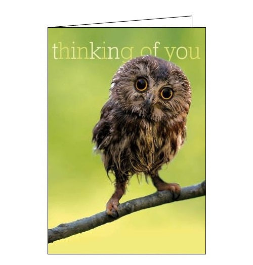 Woodmansterne Framed. Twit-two. Owl thinking of you card fromNickery Nook