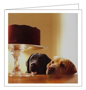 Woodmansterne Loose Leashes dogs cake Forbidden treasure blank card Nickery Nook