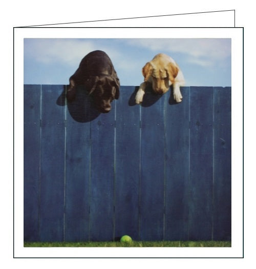 Woodmansterne Loose Leashes dogs out of the park blank card Nickery Nook