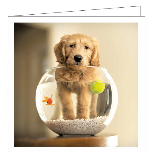 Woodmansterne Loose Leashes ron schmidt puppy goldfish bowl blank card Nickery Nook