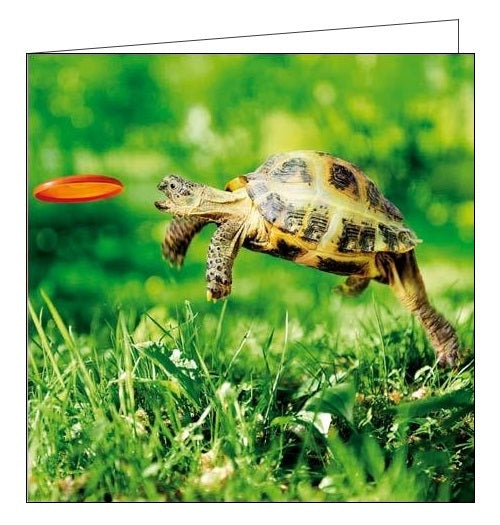 Woodmansterne NGS national gardens scheme Head's up Tortoise blank card Nickery Nook