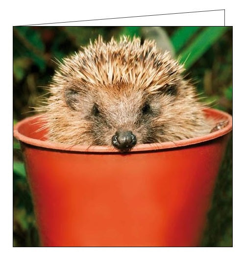 Woodmansterne NGS national gardens scheme hiding out hedgehog blank card Nickery Nook