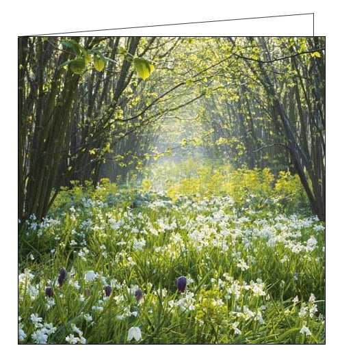 Woodmansterne National Trust Sissinghurst Castle Garden blank card Nickery Nook