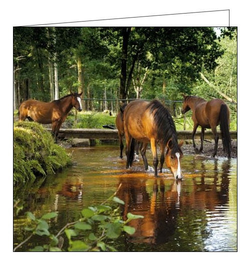 Woodmansterne National Trust dockens water horses blank card Nickery Nook