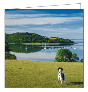 Woodmansterne National Trust fal estuary trelissick cornwall blank card Nickery Nook