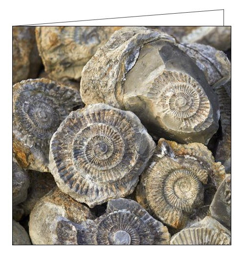 Woodmansterne National Trust fossils north yorkshire blank card Nickery Nook