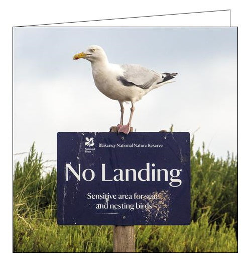 Woodmansterne National Trust herring gull blakeney norfolk blank card Nickery Nook