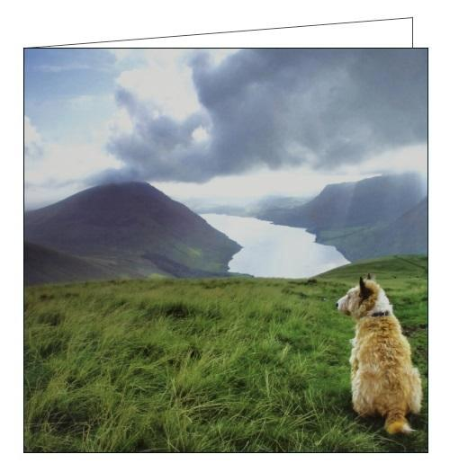 Woodmansterne National Trust overlooking wastwater dogs blank card Nickery Nook