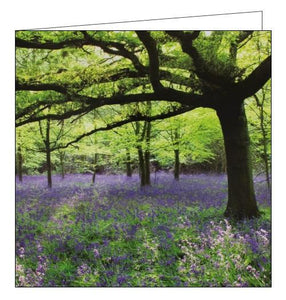 Woodmansterne National Trust speke hall bluebells blank card Nickery Nook