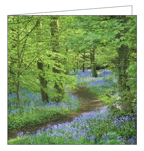 Woodmansterne National Trust speke hall merseyside bluebells blank card Nickery Nook