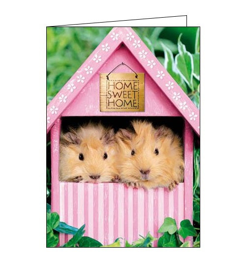 Woodmansterne New home cute guinea pigs congratulations framed card Nickery Nook new