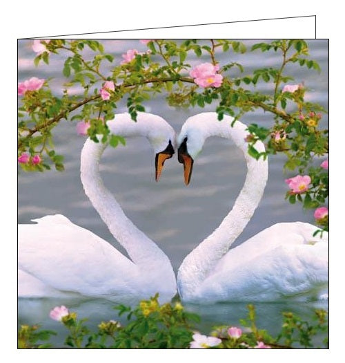 Woodmansterne RSBP Mute Swans birds heart love blank card Nickery Nook