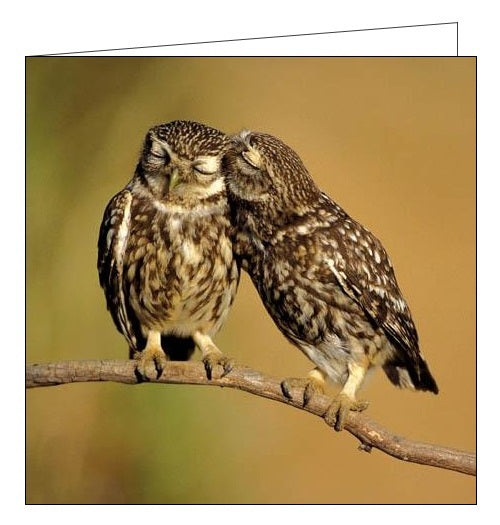 Woodmansterne RSBP little owls birds blank card Nickery Nook
