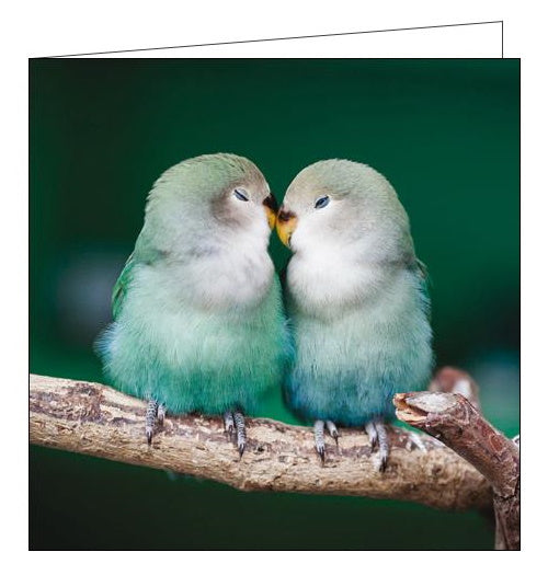 Woodmansterne RSBP lovebirds birds blank card Nickery Nook