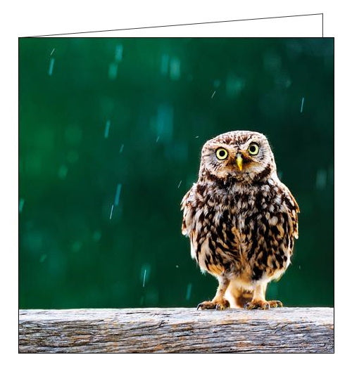 Woodmansterne RSBP owl birds blank card Nickery Nook