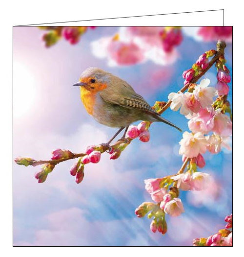 Woodmansterne RSBP robin birds blank card Nickery Nook