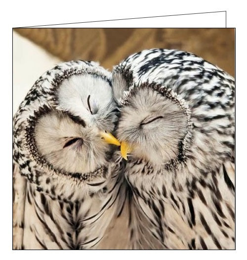 Woodmansterne RSBP ural owls birds blank card Nickery Nook