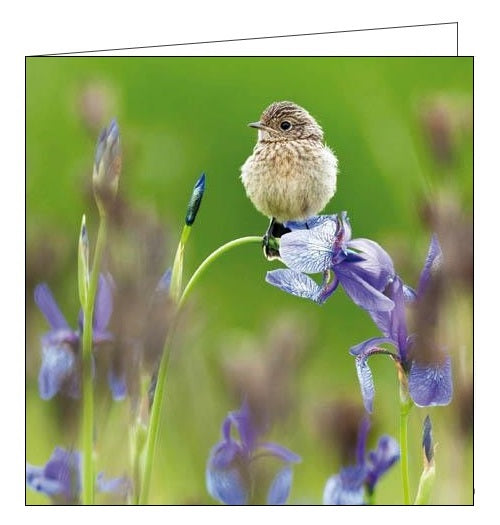 Woodmansterne RSBP young stonechat birds blank card Nickery Nook