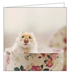 Woodmansterne cute mouse in a teacup blank card