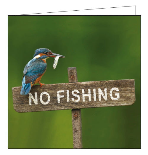 Woodmansterne no fishing kingfisher rspb charity card