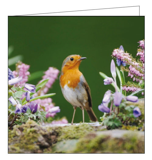 Woodmansterne robin rspb charity card