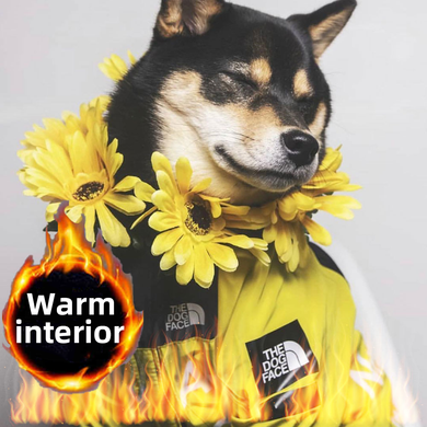 Insulated B.A.T.N. Dog Windbreaker - Supreme Paw Supply
