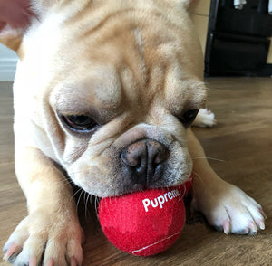 Pupreme Tennis Balls - Supreme Paw Supply