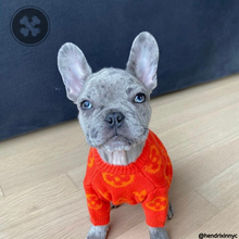 Load image into Gallery viewer, Chewy Vuitton Dog Sweater - Supreme Paw Supply