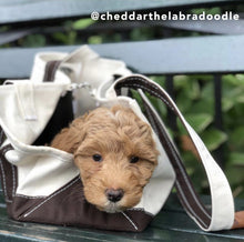 Load image into Gallery viewer, Wagwear Boat Canvas Dog Carrier - Supreme Paw Supply