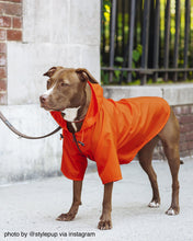 Load image into Gallery viewer, Nylon Dog Rainbreaker - Supreme Paw Supply