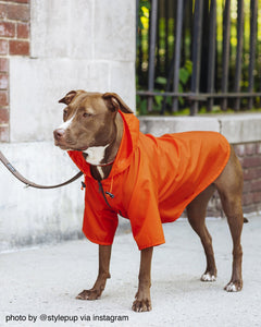 Nylon Dog Rainbreaker - Supreme Paw Supply